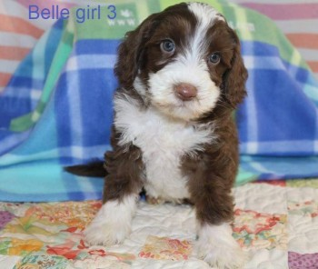 Mollys dog