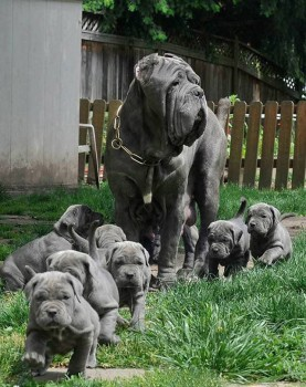Wrinkled puppers