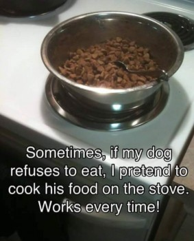 Cooked Kibble