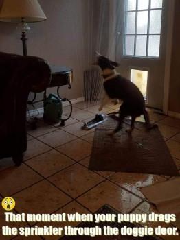 Indoor sprinkler