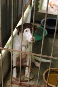 rp_shelter-dog-232x350.jpg