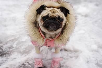 Dress for the weather