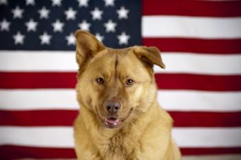 rp_dog-flag-350x232.jpg