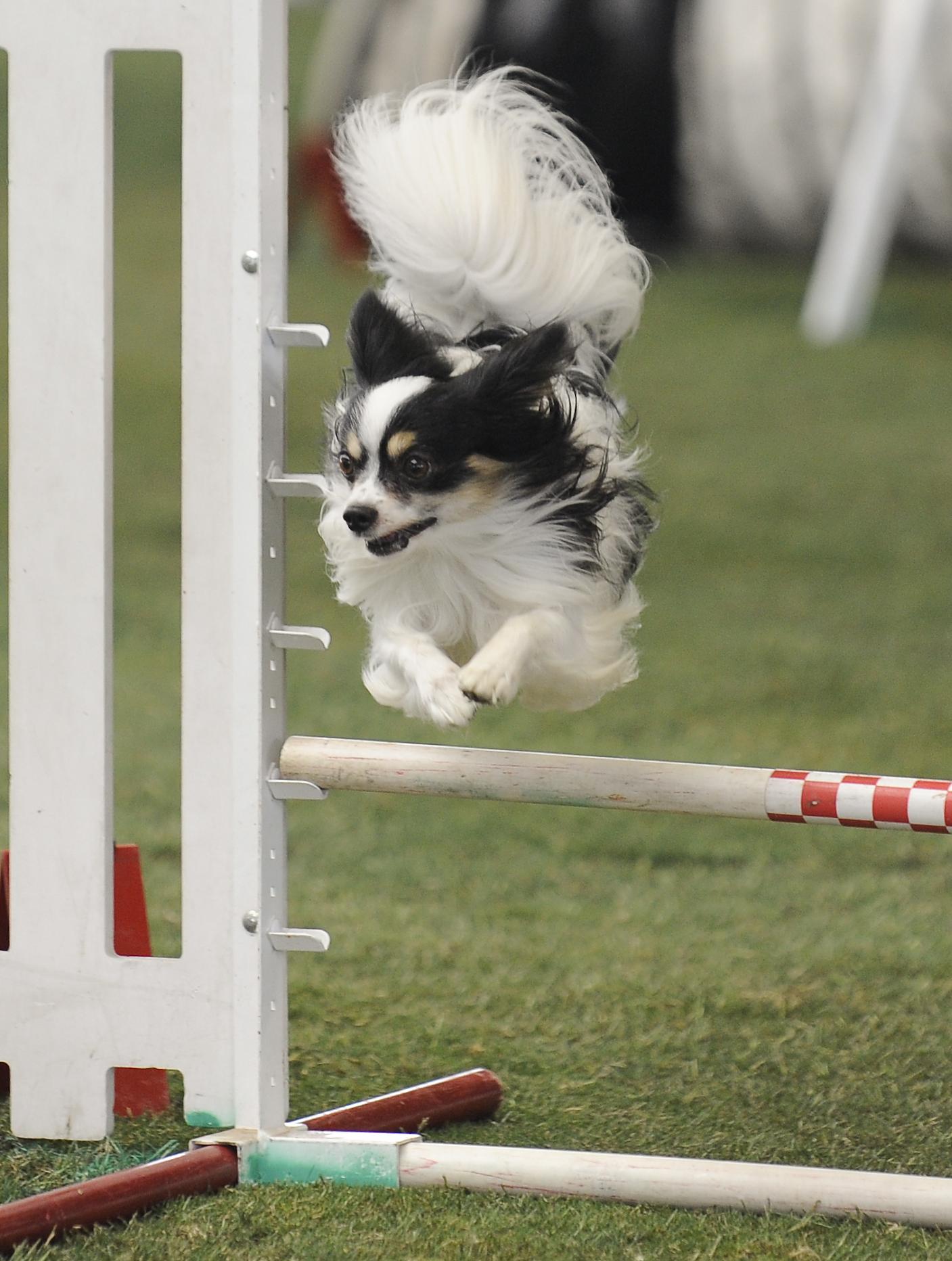 Photo:  Purina Incredible Dog Challenge