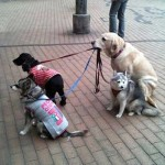 I've heard of the blind leading the blind, but the dog leading the dogs?