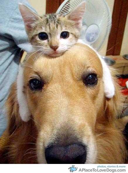 I didn't realize they made Hello Kitty headbands