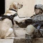 War dog 2