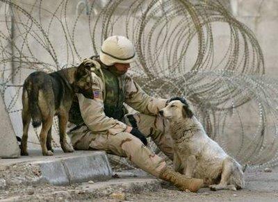 War dog 5
