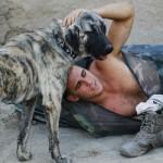War dog 7