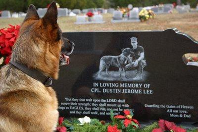 War dog 9