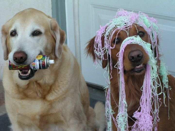 Aw, c'mon ma!  It's only a little silly string!