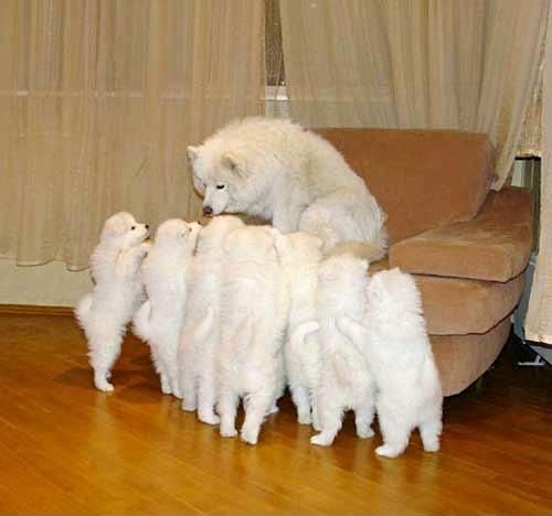 Whitey - you go long.  Paleface - go wide left.  On three.  Hut! Hut! Hut!