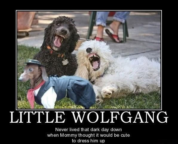 Poor Wolfy!
