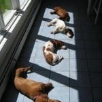 Sunshine is a dog's best friend!