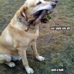 Playing fetch1