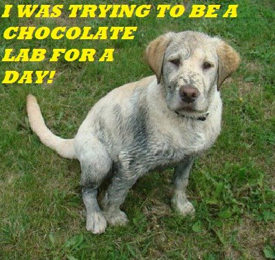 FF Dirty dog