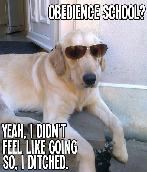 FF Obedience School