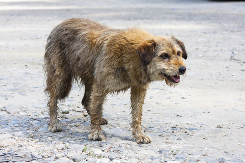 http://www.dreamstime.com/stock-photos-abandoned-dog-image26936783