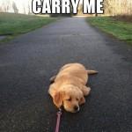 FF Carry Me