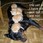 FF Kitten Pox