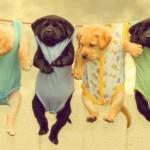 Puppy Onesies