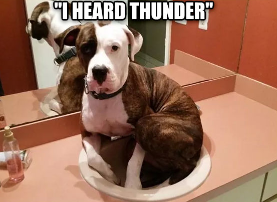 Thunder sink