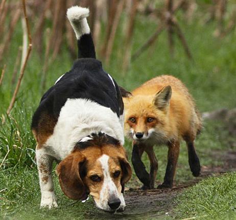 FF Worst Hunting Dog Ever