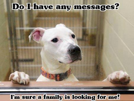 FF Messages