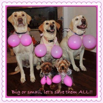 rp_Breast-Cancer-Awareness-350x350.jpg