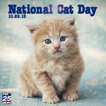 rp_Cat-Day-350x350.jpg
