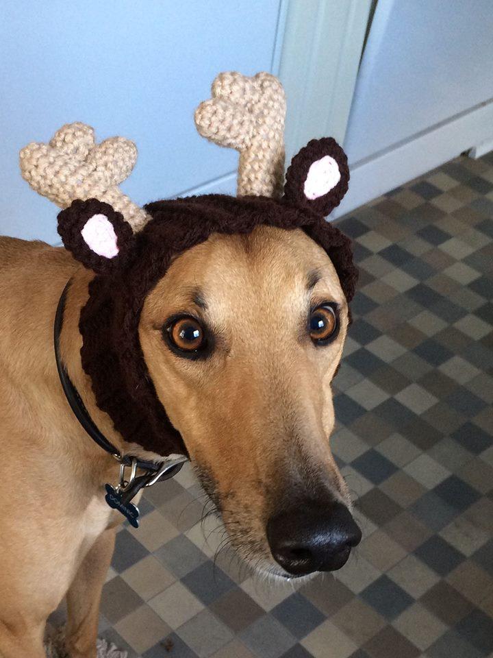Deer Dominic
