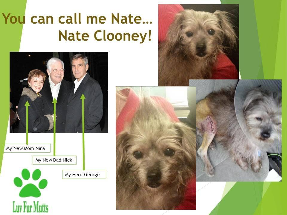 Nate Clooney