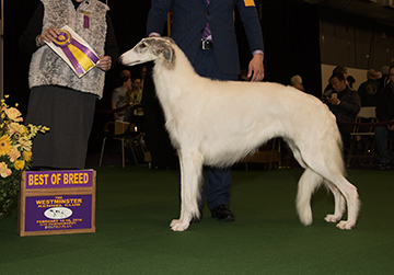 Best in the Hound Group, the Borzoi named Lucy