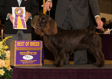 The Boykin Spaniel, Larley's Nothing But The Truth