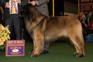 The Leonberger, Khaimas' From Me to You