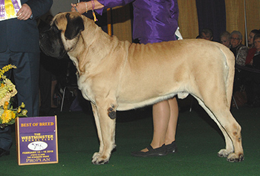 The Mastiff, Goldleaf's Trouble Coming