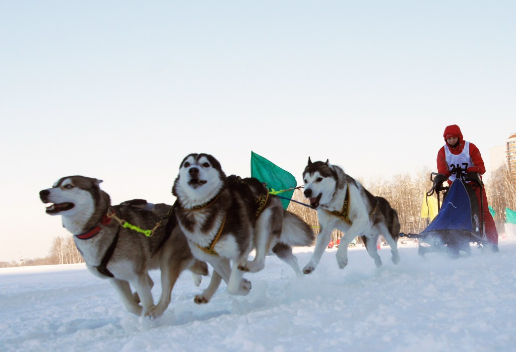 """RUSSIA, MOSCOW - FEBRUARY 19: Participants compete in arrival """"R"""