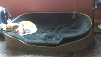 rp_Bigger-Bed-Needed-350x197.jpg