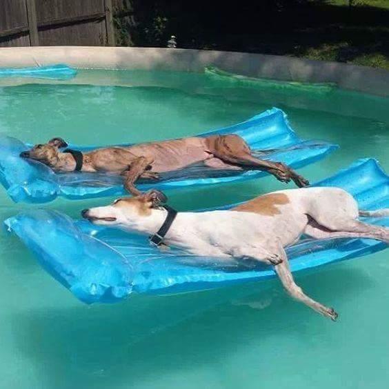 Pool Sleeping