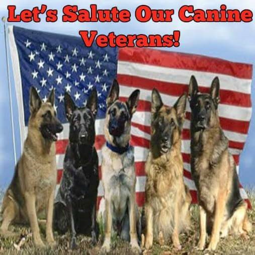 Canine Vets