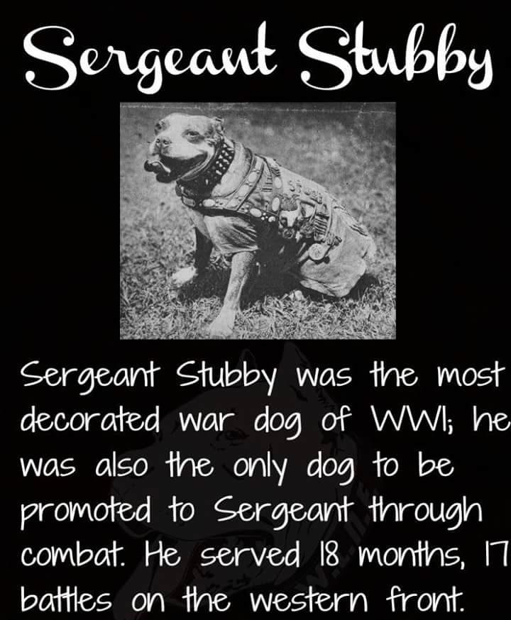 sgt-stubby