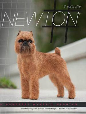 Newton  Photo Courtesy Ingrus.net