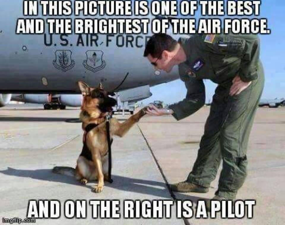 Air Force K9