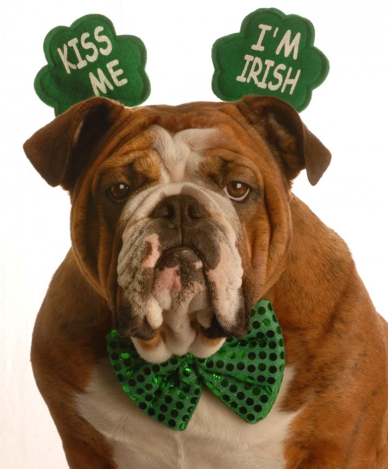 Bulldog Kiss Me I'm Irish