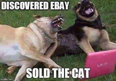 FF Sold the Cat
