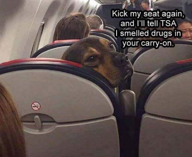 FF TSA