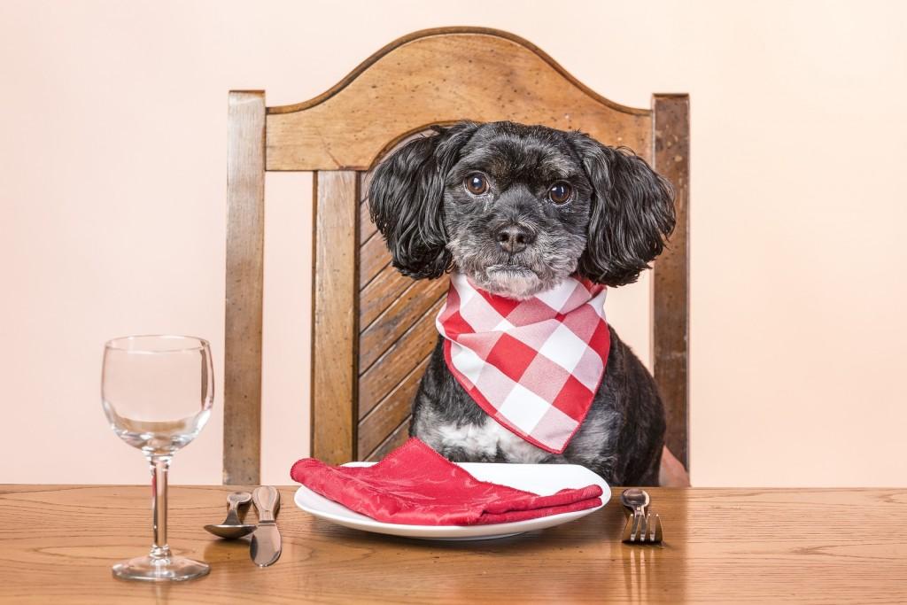 dog at table