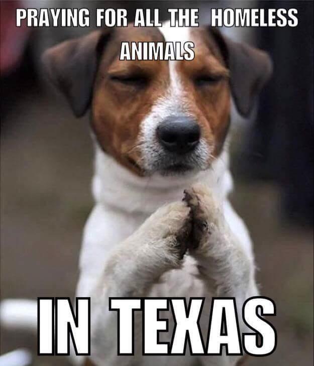 praying dog
