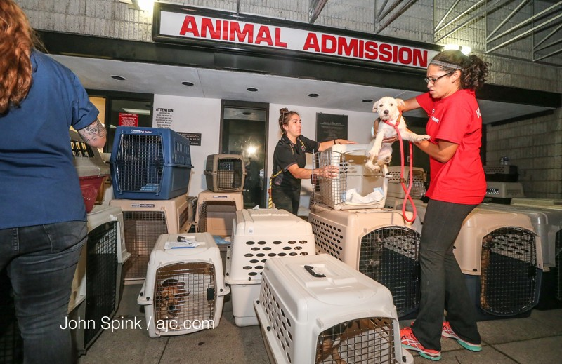 Photo:  John Spink, Atlanta Journal Constitution.  The Atlanta Humane Society has taken in 100 animals to clear room in Houston shelters for storm refugees.