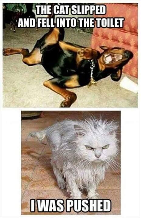 cat slipped